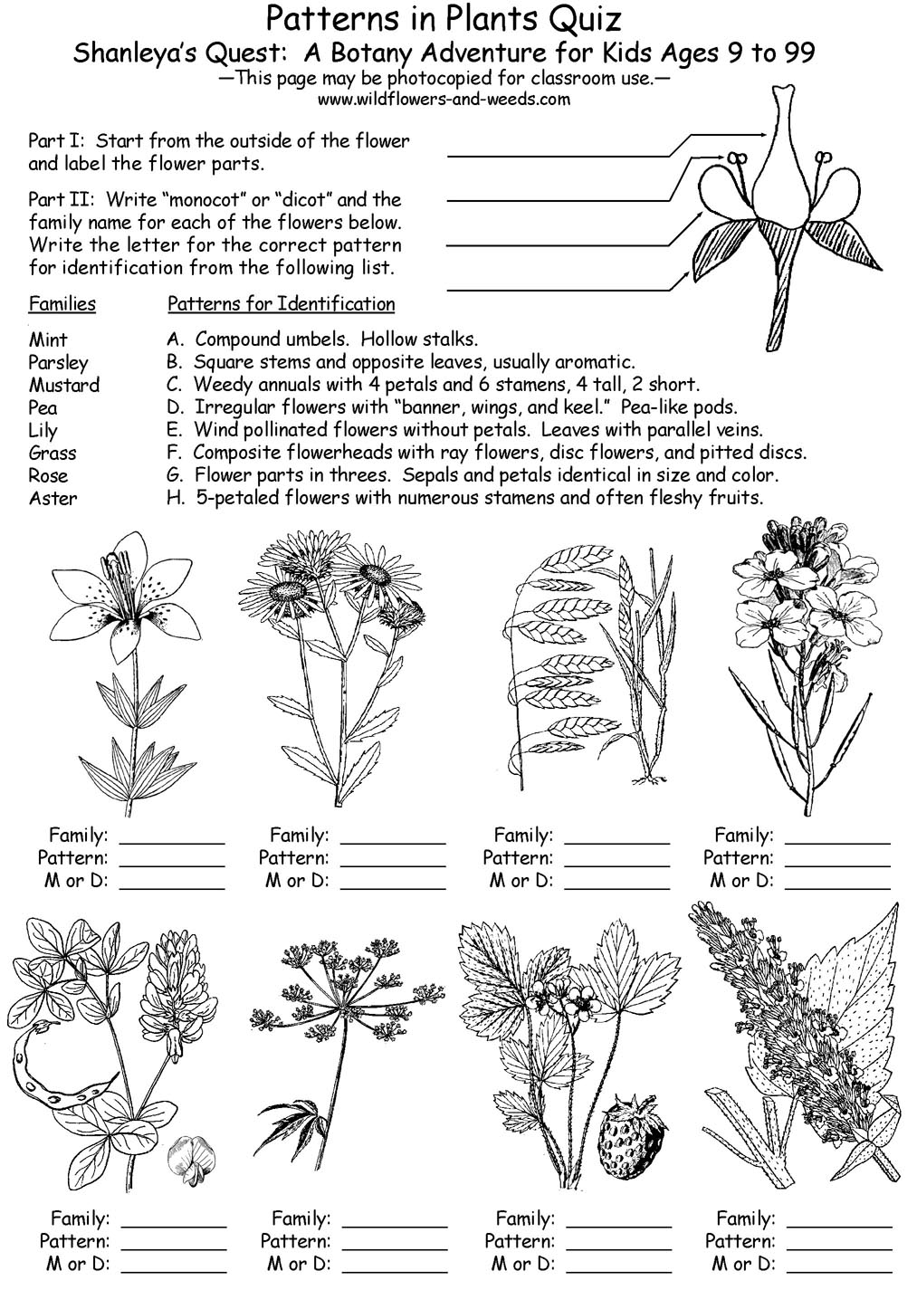 ... Worksheet High School lesson plans: science: biology: botany: patterns