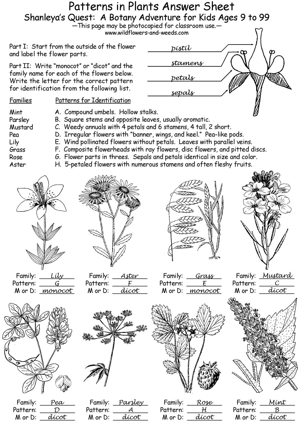 Lesson Plans Science Biology Botany Patterns in Plants with – Patterns of Evolution Worksheet