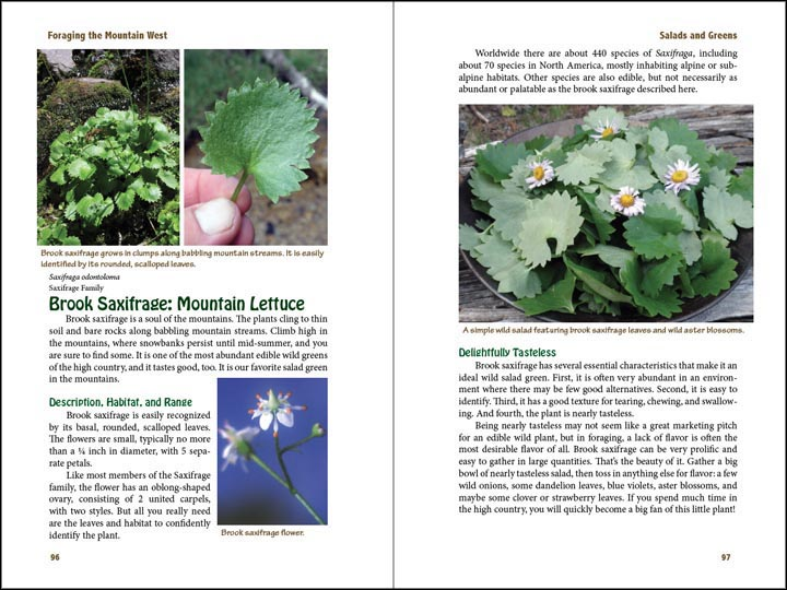 Brook Saxifrage, sample page from Foraging the Mountain West.