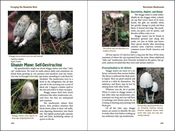 Shaggy Mane, sample page from Foraging the Mountain West.