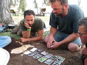 Playing the Shanleya's Quest Patterns in Plants Card Game.