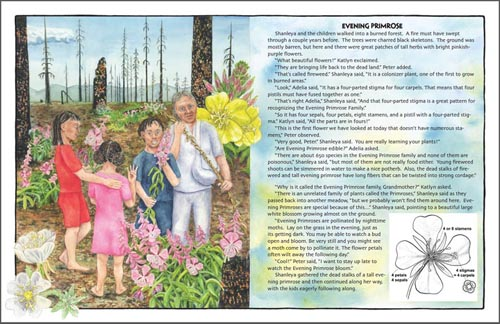 Evening Primrose Family from Shanleya's Quest 2: Botany Adventure at the Fallen Tree.