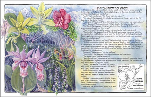 Orchid Family from Shanleya's Quest 2: Botany Adventure at the Fallen Tree.