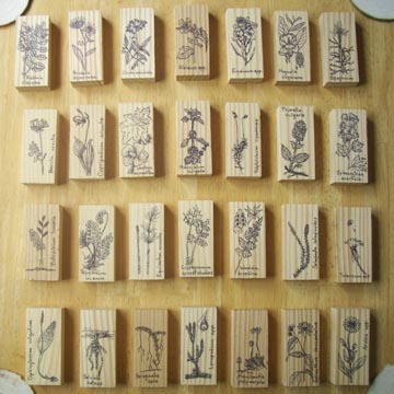 Plant drawings on wooden blocks.